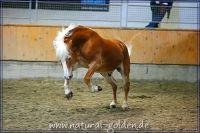 k2011_02_04_Steinach_045
