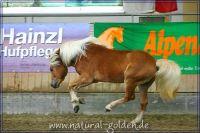 k2011_02_04_Steinkogel_024