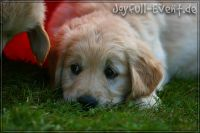 d2011_08_20_Puppies_034