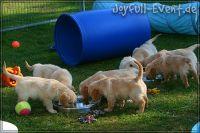d2011_08_20_Puppies_170