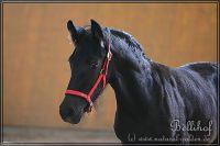 dd2011_08_27_Laquena_506_022