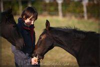 c2011_10_22_Fohlen_249