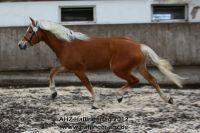 a2012_03_11_AHZ_Haflingertag_Wellensteyn_132