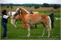 cc2012_07_01_Kat.Nr.02_Natale_091