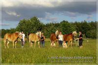 vv2013_06_22_AHZ_Haflinger_FUN_Turnier_074