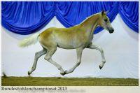 aaa2013_08_Bundesfohlenchampionat_027_ReserveSieger_SF_007