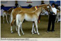 aaa2013_08_Bundesfohlenchampionat_027_ReserveSieger_SF_054