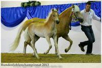 aaa2013_08_Bundesfohlenchampionat_031_vAlphonso_009