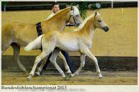 aaa2013_08_Bundesfohlenchampionat_031_vAlphonso_020