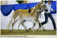 aaa2013_08_Bundesfohlenchampionat_031_vAlphonso_027