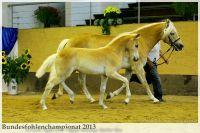 aaa2013_08_Bundesfohlenchampionat_035_Rachel_035