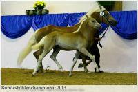 aaa2013_08_Bundesfohlenchampionat_036_Nena_vNottingHill_042