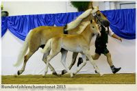 aaa2013_08_Bundesfohlenchampionat_038_vStano_028