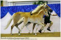 aaa2013_08_Bundesfohlenchampionat_038_vStano_030