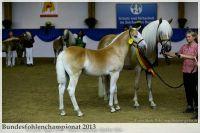 aaa2013_08_Bundesfohlenchampionat_060_vStano_005
