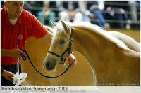 aaa2013_08_Bundesfohlenchampionat_061_WyoWingonoMM_008