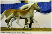 aaa2013_08_Bundesfohlenchampionat_063_Bachelor_011