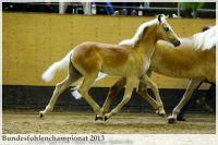 aaa2013_08_Bundesfohlenchampionat_063_Bachelor_035