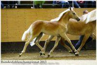 aaa2013_08_Bundesfohlenchampionat_063_Bachelor_036