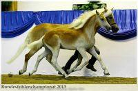 aaa2013_08_Bundesfohlenchampionat_063_Bachelor_044