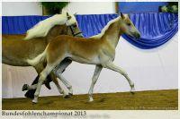 aaa2013_08_Bundesfohlenchampionat_063_Bachelor_050