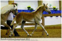 aaa2013_08_Bundesfohlenchampionat_063_Bachelor_056
