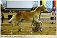 aaa2013_08_Bundesfohlenchampionat_063_Bachelor_062