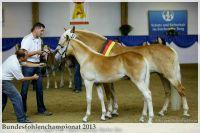 aaa2013_08_Bundesfohlenchampionat_063_Bachelor_069