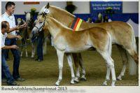 aaa2013_08_Bundesfohlenchampionat_063_Bachelor_072