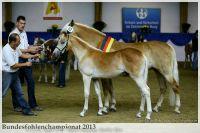aaa2013_08_Bundesfohlenchampionat_063_Bachelor_078