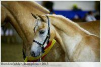 aaa2013_08_Bundesfohlenchampionat_063_Bachelor_091