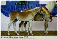 aaa2013_08_Bundesfohlenchampionat_063_Bachelor_098