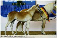 aaa2013_08_Bundesfohlenchampionat_063_Bachelor_100