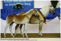 aaa2013_08_Bundesfohlenchampionat_063_Bachelor_105