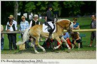 aaa2013_08_Bundesstutenschau_022_Unicata_030