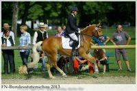 aaa2013_08_Bundesstutenschau_029_Swara_019