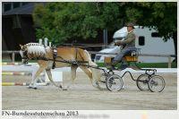 aaa2013_08_Bundesstutenschau_037_Orellia_043