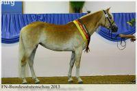 aaa2013_08_Bundesstutenschau_043_Stelia_247