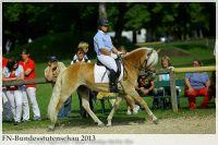 aaa2013_08_Bundesstutenschau_043_Stelia_299