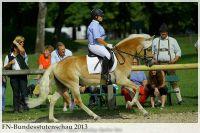 aaa2013_08_Bundesstutenschau_043_Stelia_307