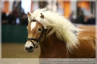 cc2014_03_02_OHD_Hengstschau_01_Welcome_040