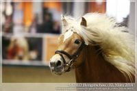cc2014_03_02_OHD_Hengstschau_01_Welcome_043
