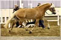 cc2014_03_02_OHD_Hengstschau_07_Strippoker_021