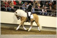 cc2014_03_02_OHD_Hengstschau_09_Windhauch_022