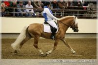 cc2014_03_02_OHD_Hengstschau_20_Allacher_037