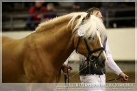 cc2014_03_02_OHD_Hengstschau_20_Allacher_057